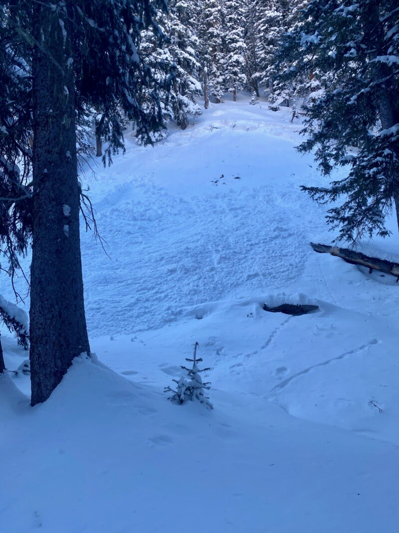 Small natural avalanche below treeline at 10,000'