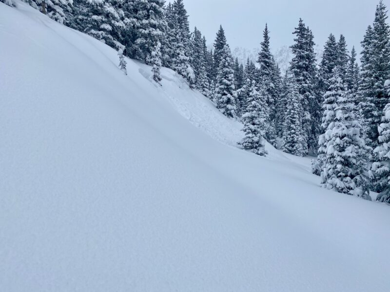 Small avalanche I triggered below treeline from where I took the photo.
