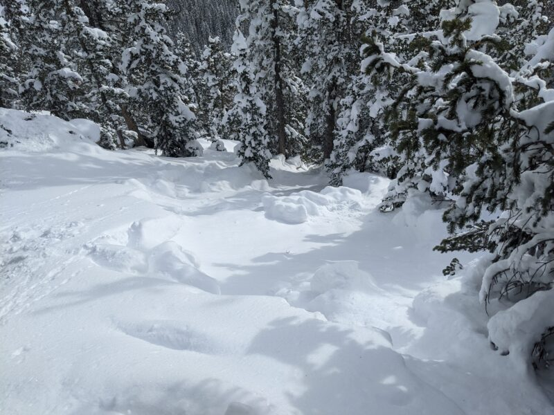 Smaller of the two avalanches observed. Note the objective hazard of dense trees directly below.