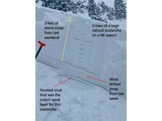 Mar 15, 2021: Crown profile from a large natural persistent slab avalanche on a NE aspect.  This avalanche failed on 1 to 2 mm facets around a crust and below the wind packed slab that formed last week with strong winds.